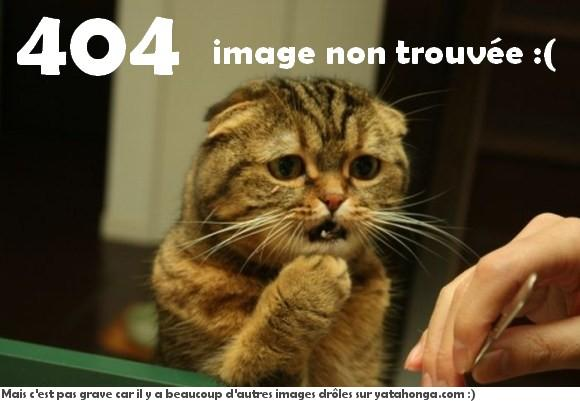 T'as vu ma chatte